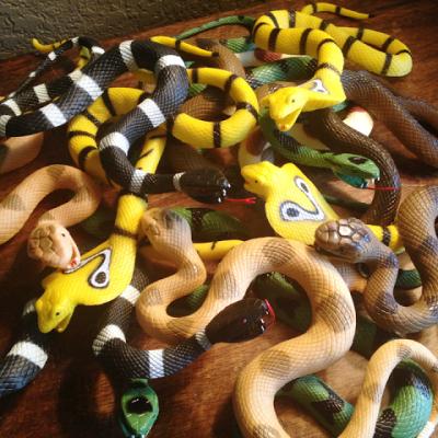 Snake Safari!
