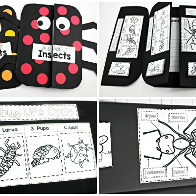 Insect Science Activities