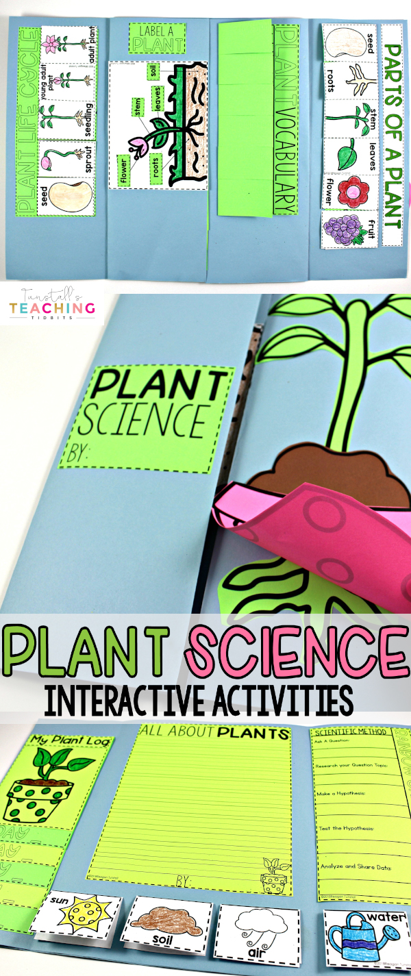 "This unit provides interactive science activities to teach all about plants! Fill your own science notebook or create a 3-dimensional plant science book full of interactive hands on science lessons on parts of a plant, plant life cycle, plant needs, and more! These lap book foldables make for great STEM resources for kindergarten, first, and second grade. To learn more about ""Interactive Plant Science"", visit www.tunstallsteachingtidbits.com"