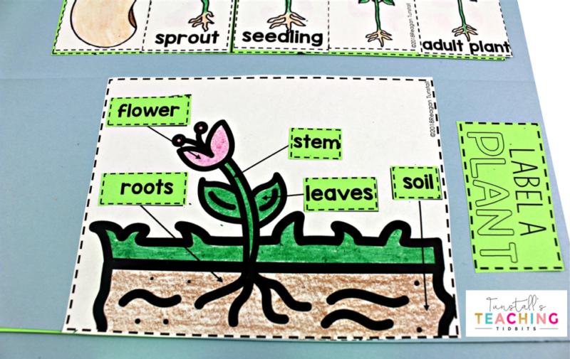 Interactive Plant Science - Tunstall's Teaching Tidbits