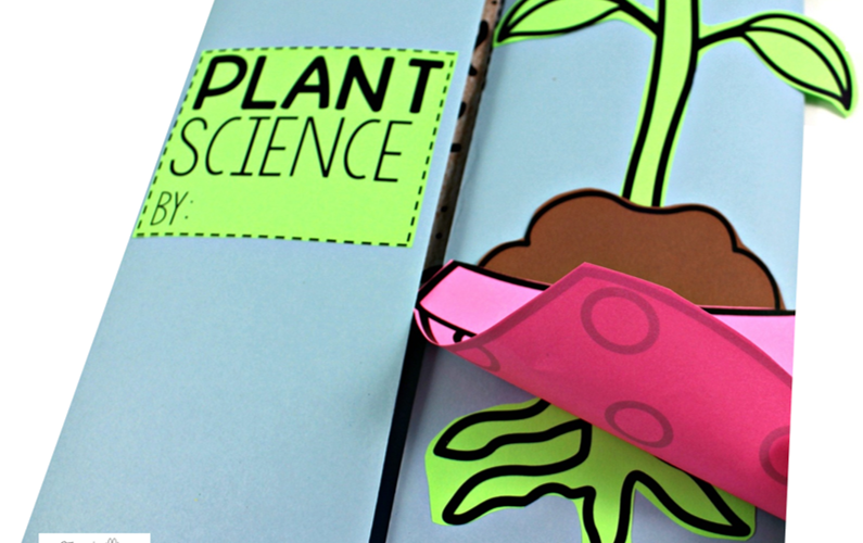 Interactive Plant Science