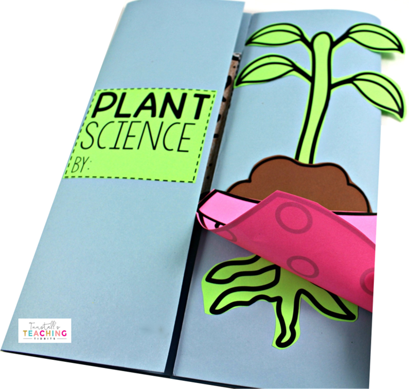 Interactive Plant Science - Tunstall's Teaching Tidbits