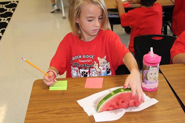 watermelon summer science